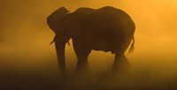 elephant at sunset - namibia